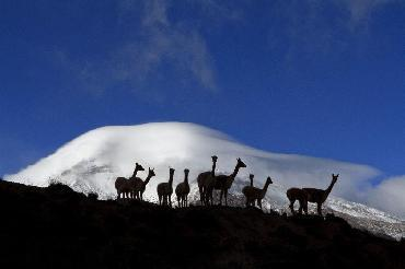 Visiter Parc National du Chimborazo