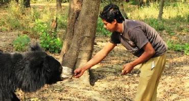 Visiter ONG Wildlife SOS of India-ABRF